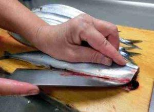 【秋刀魚の旬】築地市場の仲買人直伝 新鮮なサンマの選び方 3つのポイント