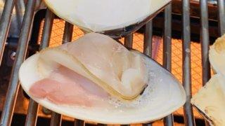 豊洲市場江戸前場下町の海鮮焼き店「うまみ」で、焼かれる大きなハマグリ。