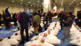 【 UNI/TORO/CRAB 】FREASH SEAFOODS from TOYOSU fish market