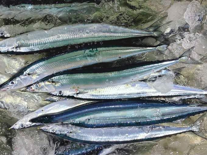 【豊洲市場・魚屋の魚話】秋といえば!『旬』の食べ物『サンマの選び方』3つのポイント