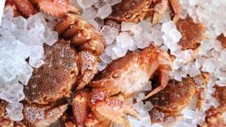 知ってた?『夏の毛蟹』は特別旨い!漁師や市場関係者に絶賛させるおいしさのワケ
